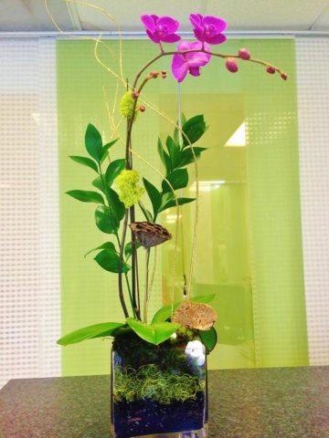 phalaenopsis single purple